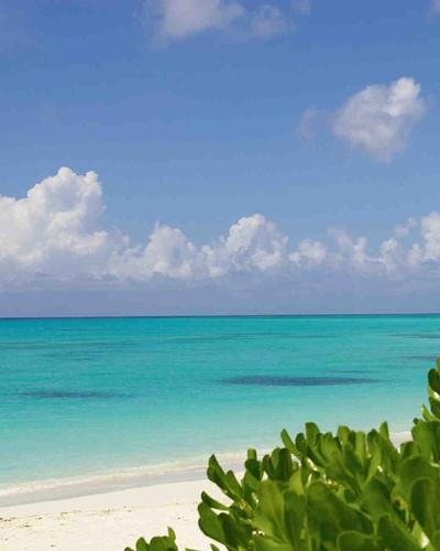 Νησιά Τερκς και Κάικος, Καραϊβική