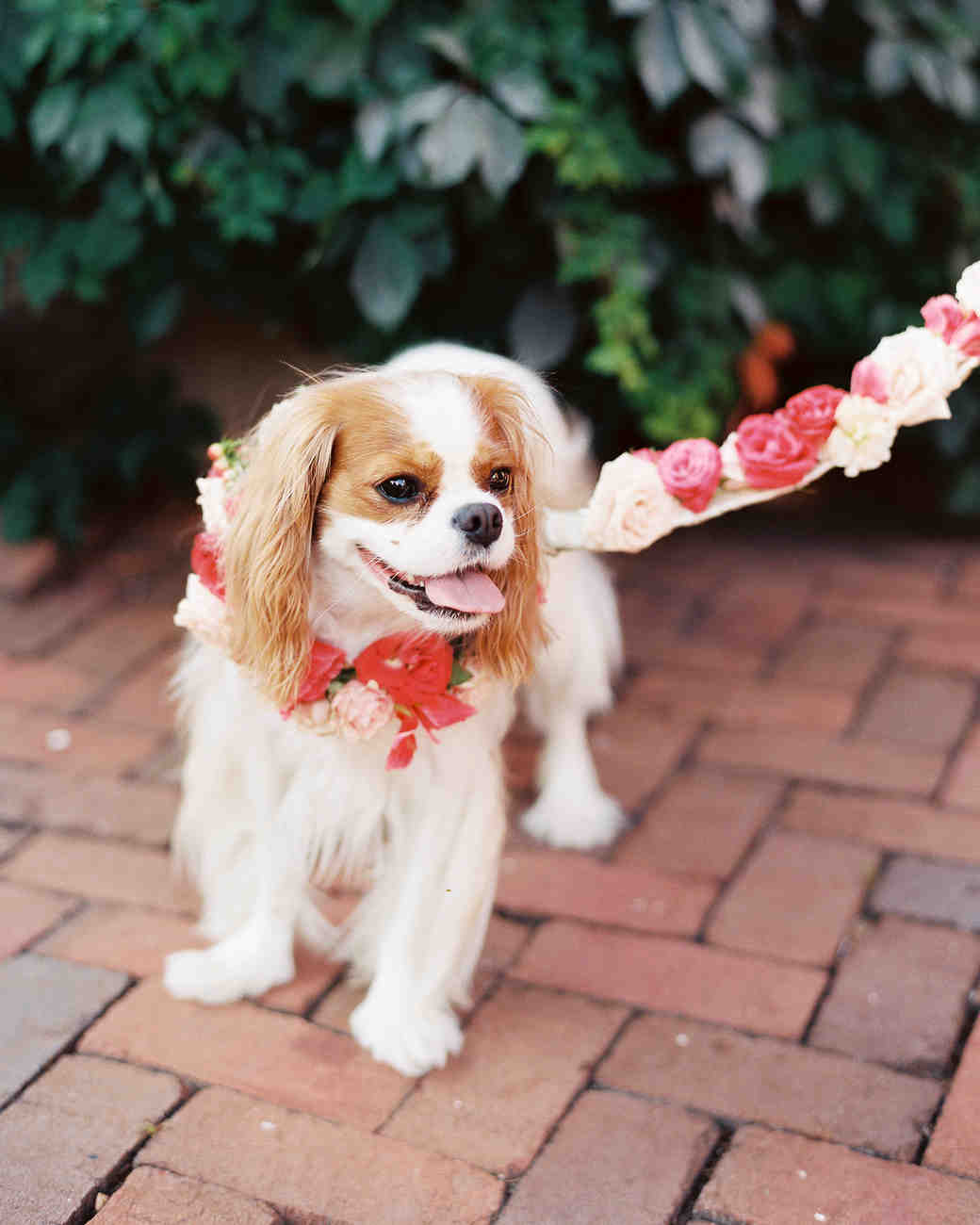 Floral κολάρο και λουρί για την ημέρα του γάμου.